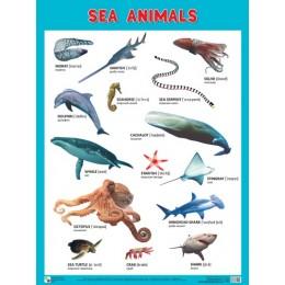 Sea Animals = Морские обитатели / Плакат