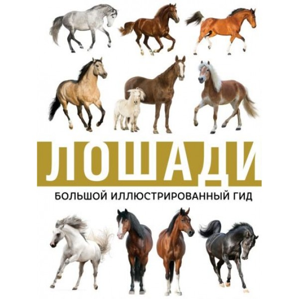 Лошади / Большой иллюстрированный гид