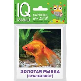 Аквариумные рыбы / Карточки для детей с подсказками для взрослых