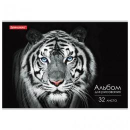 Альбом для рисования А4 32 л., скоба, обложка картон, BRAUBERG ЭКО, 202х285 мм, Тигр (1 вид), 105610
