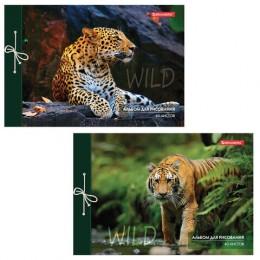 Альбом для рисования А4 40 л., на завязках, обложка картон, BRAUBERG, 200х285 мм, Дикие кошки (2 вида), 105615