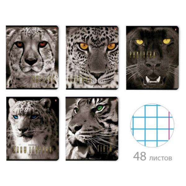 Тетрадь А5 48л. АЛЬТ скоба, клетка, глянцевый лак, Большие кошки (5 видов), 7-48-366